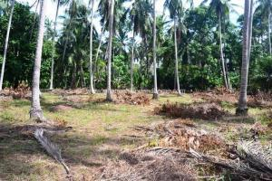 Bargain priced Koh Phangan investment land for sale